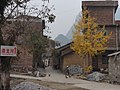 Gingko Tree - panoramio.jpg