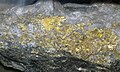 Gold and quartz (Main Ledge, 3050 Level, Homestake Mine, Lead, Black Hills, South Dakota, USA) 3 (17234822895).jpg