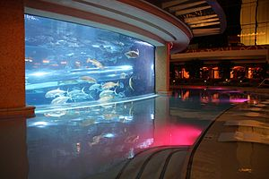 Golden Nugget Las Vegas - Golden Nugget Casino - Slide through the shark tank