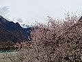 Gongbo'gyamda, Nyingchi, Tibet, China - panoramio (17).jpg