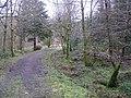 Gortin Glens Forest Park (1) - geograph.org.uk - 1711692.jpg