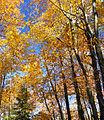 Gouldsboro State Park Gold.jpg
