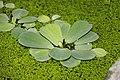 "Gradina Botanica ""Vasile Fati"" (4653413267).jpg"