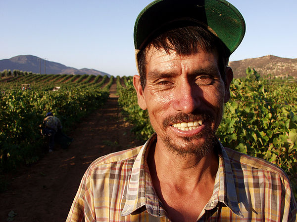 Grape worker.jpg