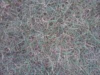 Grass-karuka.jpg