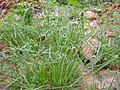Grass variety.jpg
