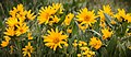 Grasshopper Flat, Malheur County (36114017344).jpg