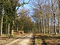 Gravel track in Roe Inclosure, New Forest - geograph.org.uk - 330599.jpg
