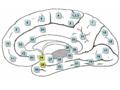 Gray-Brodman-Entorhinal Cortex EC .png