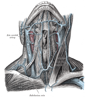 Jugular venous arch - The veins of the neck, viewed from in front. (Jugular venous arch visible but not labeled.)
