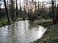 Great Stour at Chilham Mill - geograph.org.uk - 341084.jpg