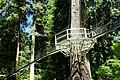 Greenheart TreeWalk - UBC Botanical Garden - Vancouver, Canada - DSC08053.jpg