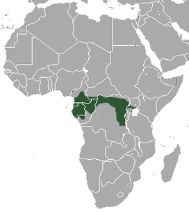 Grey-cheeked Mangabey area.png