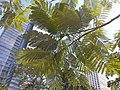 HK 中環 Central 遮打花園 Chater Garden flora green leaves September 2020 SS2 05.jpg