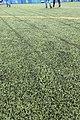 HK 油麻地 Yau Ma Tei 京士柏運動場 King's Park Sports Ground green man-made grass October 2018 IX2 01.jpg