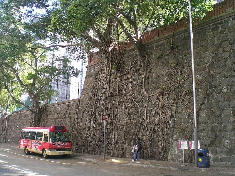 File:HK Forbes Street Kennedy Town Stone Wall Trees n Minibus.JPG