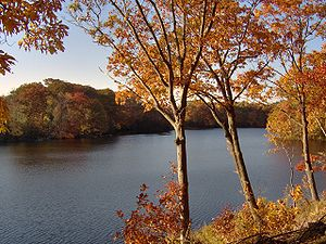 Lawrence Brook (Westons Mill Pond section) and...