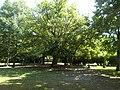 Halász Móricz Mansion, tree and furniture, 2017 Dabas.jpg