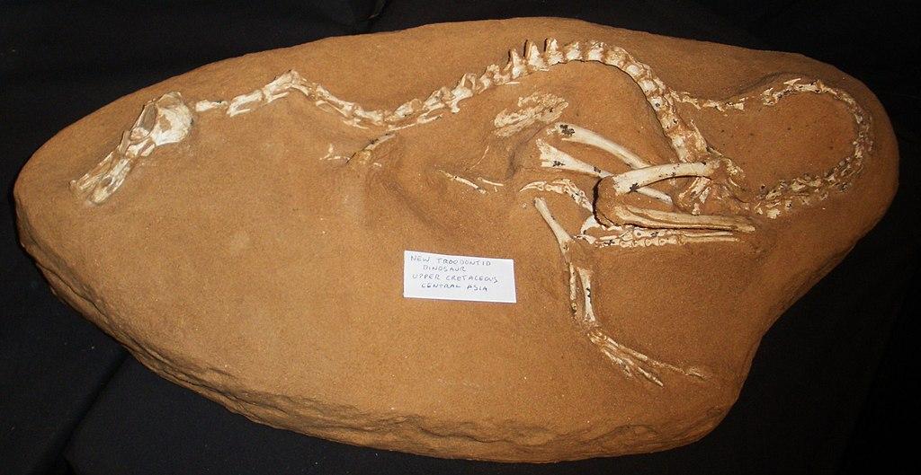 Halszkaraptor escuilliei.jpg