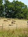 Harvest at Salmonsbridge Farm. - geograph.org.uk - 203122.jpg