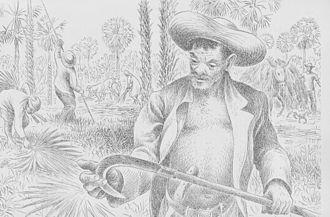 Copernicia prunifera - Image: Harvest tool