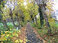 Hawarden St Deiniol's graveyard - geograph.org.uk - 280298.jpg