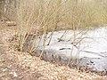 Heinersdorf - Eisiger Teich (Icy Pond) - geo.hlipp.de - 34599.jpg