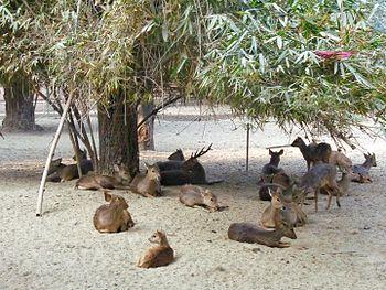 Herd Of Deer.jpg