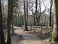 High Woods Nr Little Common East Sussex - geograph.org.uk - 111197.jpg