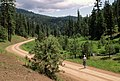 Hiker walks forest road Ochoco National Forest (36456356141).jpg