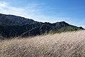 Hiking Towsley Canyon (2324736212).jpg