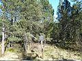 Hinterzartener Moor 1130120.jpg