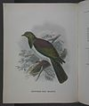 History of the birds of NZ 1st ed p156-2.jpg