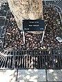 Holy Land Pilgrimage 2017 P091 Yad Vashem Irena Sendlerowa Tree.jpg