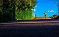 Homem Correndo no Jardim Botânico em Curitiba.jpg