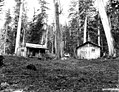 Homestead consisting of two shake cabins, Olympic Peninsula, Washington, 1906 (KINSEY 2824).jpeg
