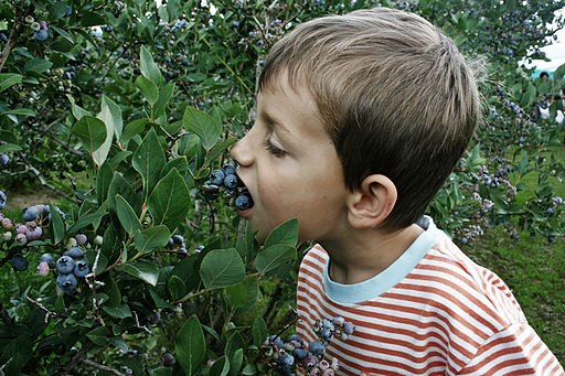 Honeeeeeey, I know WHAT has been eating our blueberries!