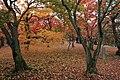 Honmachi 15-chome, Higashiyama Ward, Kyoto, Kyoto Prefecture 605-0981, Japan - panoramio (8).jpg