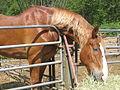 Horse (4159156999).jpg