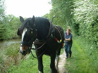 Horse-drawn boat boat operating on a canal, pulled by a horse walking beside the canal on a towpath
