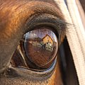 Horse eye Another perspective.jpg