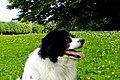 Hundewiese - BADEN - BADEN - panoramio.jpg