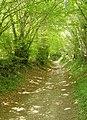Husseys Lane, Well, Long Sutton - geograph.org.uk - 200511.jpg