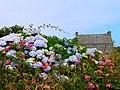 Hydrangea et paysage (Ouessant) (1).jpg