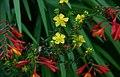 herbal medicine expanded commission e monographs pdf