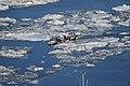 Ice canoeing Quebec 2016 3.JPG