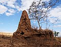 Internal structure of a termite mound.jpg