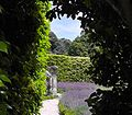 Into the Lavender Garden.jpg