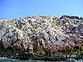 Islas Ballestas - panoramio (24).jpg