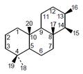 Isocopalano - Numeración.png